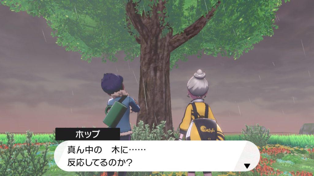 真ん中の木がパワースポット?