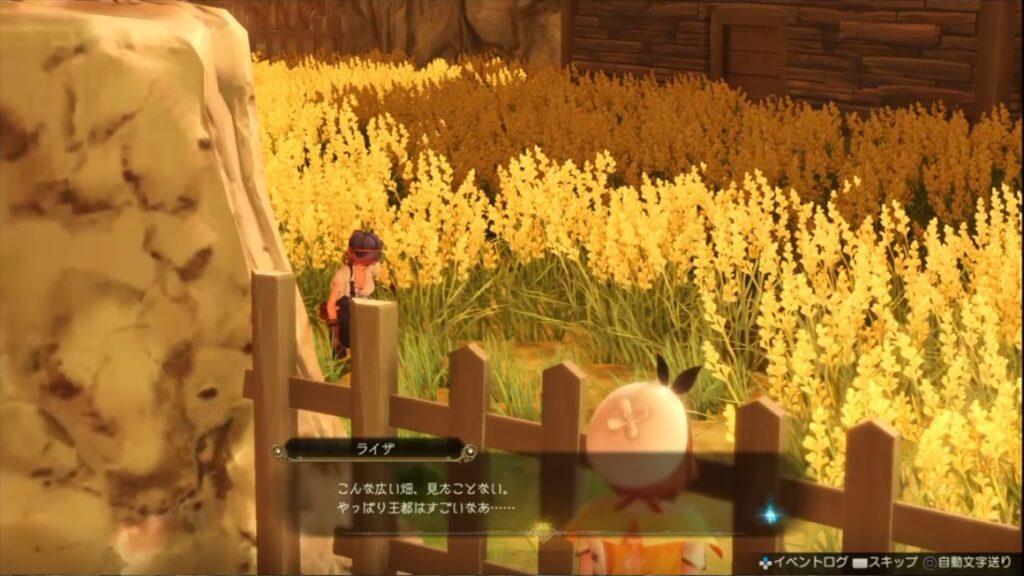 こんな広い畑、見たことない